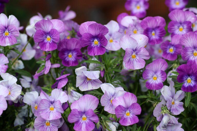 blommor i maten